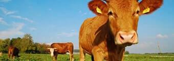 Земеделие и животновъдство