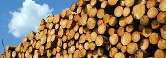Дървообработване и мебелна промишленост