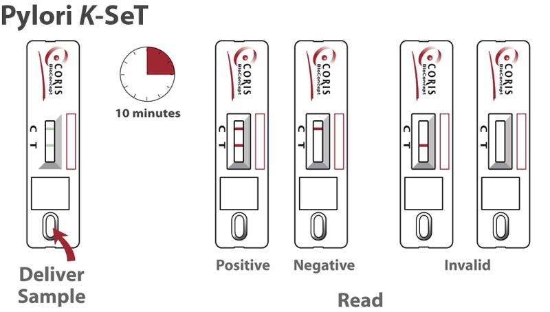 Cassettes Helicobacter Pylori Rapid Test For Detection
