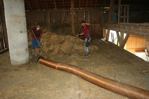 altes Stroh von Scheunendachboden saugen
