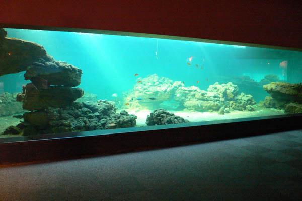 baie acrylique d 39 un aquarium de 10m de long. Black Bedroom Furniture Sets. Home Design Ideas