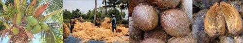 Kokosfasern