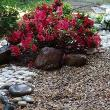 Landscape design with gravel and stones