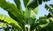piante mediterranee