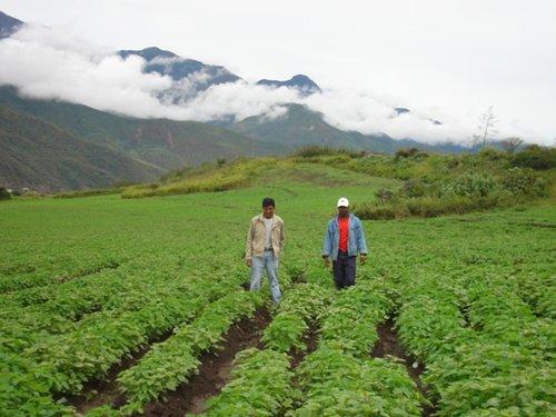 Chia im Andenhochland