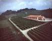La azienda agricola Drusian