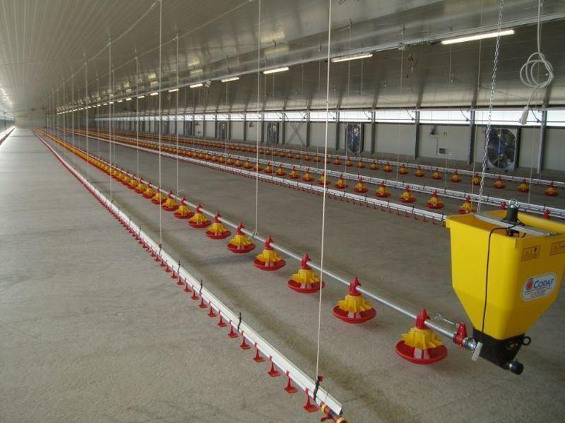 alimentazione automatica settore avicolo