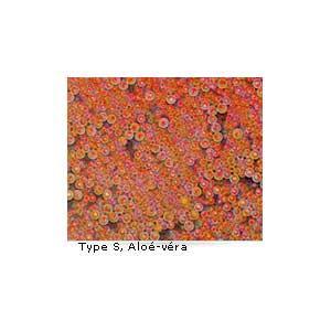 Type S, Aloé-véra.