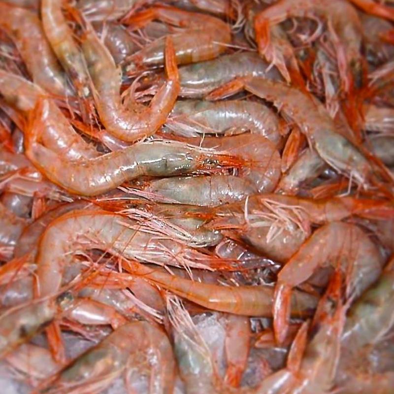 Gamberi pescati a Mazara del Vallo