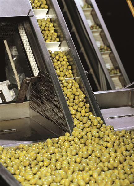 Olives sorting