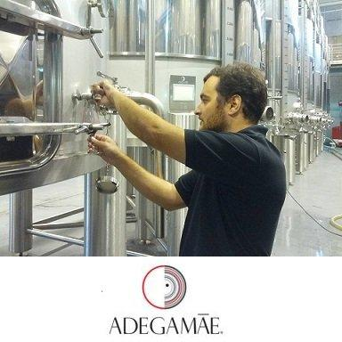 Winemaker in their daily work.