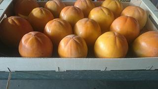 fruta fresca caqui extra