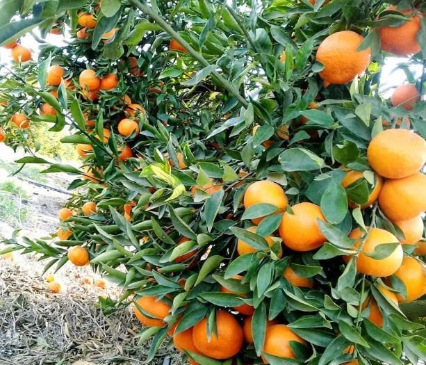 Ganet El Zohor Crops