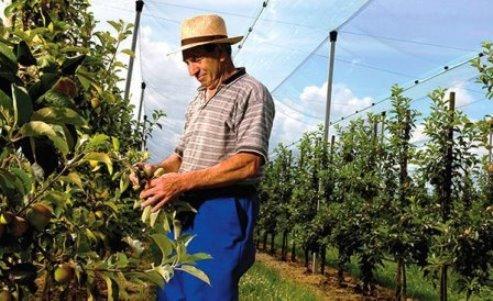 Netten en agrotextiel voor gewasbescherming, tuinaanleg, agro en doe-het-zelf.