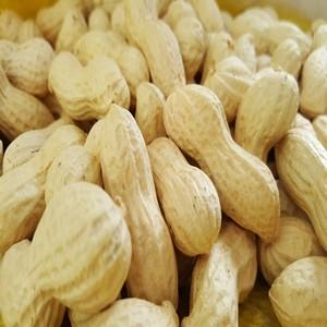 We provide all sizes of Extra white peanuts in shells with highest quality ever 6/8, 7/9, 8/10, 9/11 & 10/12.