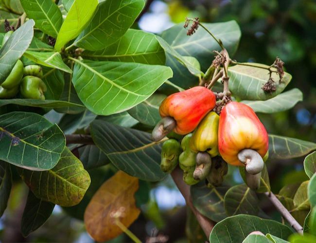 Vente de produits tropicaux