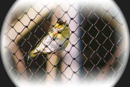 Aviary nets