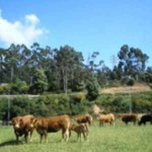 We sell: beef quarter, beef carcass, beef side, beef elements.