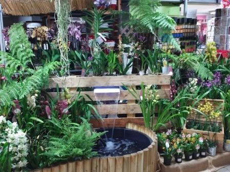 Différentes variétés d'Orchidées selon les saisons.