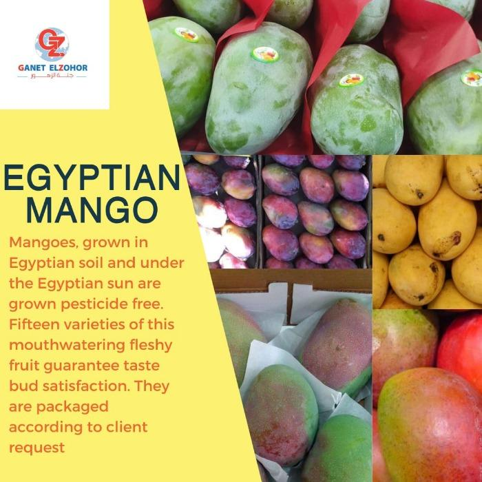 Egyptian Mangoes