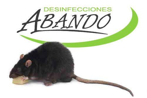 Tratamientos de desratización en Bilbao y Bizkaia. Eliminar ratas y ratones en su empresa o comunidad de vecinos es necesario por su salud y seguridad. Exterminadores de roedores.