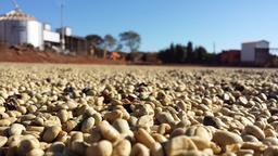 importatori di caffè crudo dai paesi di origine.