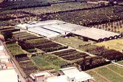 Azienda Agricola Florovivaistica Laura Ryolo