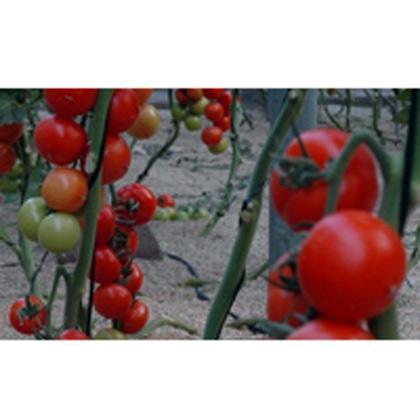 Frutas y hortalizas: importación-exportación