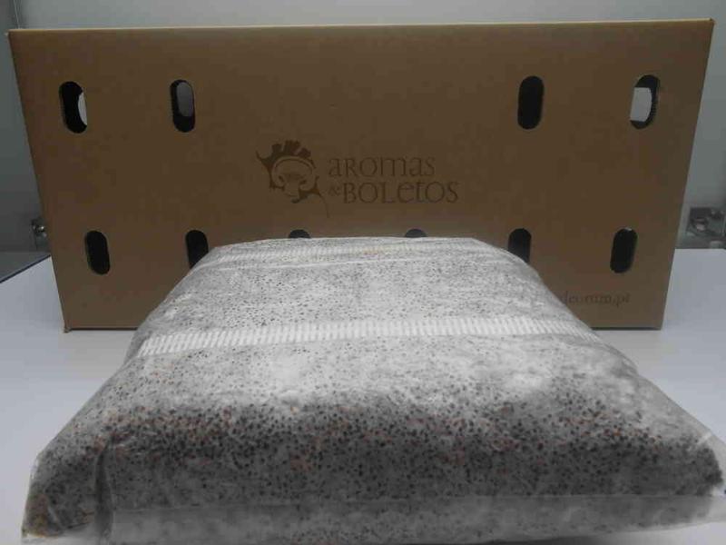 Micélio em gão, serrim e cavilhas para produção de cogumelos exóticos (Shiitake, Ganoderma lucidum, Maitake entre outros)