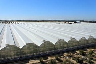 Sural Greenhouses is project of 38 hectares greenhouses in Antalya region of Turkey. Tomatoes growing greenhouse produces high quality product for export. You are always wellcome here :)