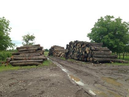 Wood - sawn and treated