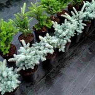 Ткань мульчирующая от сорняков