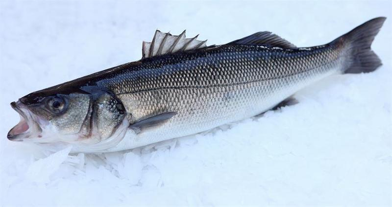 Breeding and sale of European Sea-bass_Sea Bream