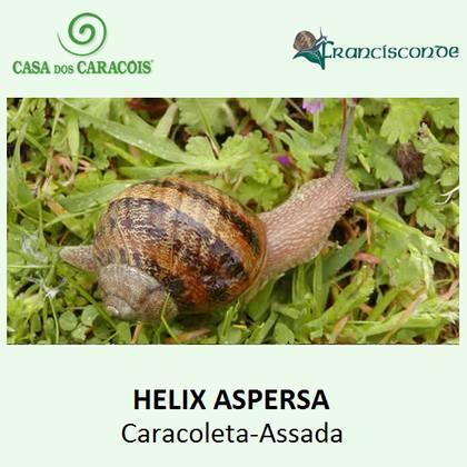 """É um caracol comestível , utilizado em iguarias como o """" Escargot de Bourgogne"""" em França, """" Caracoles-Cascorro"""" em Espanha e, em Portugal utilizado na """" Caracoleta-Assada""""."""