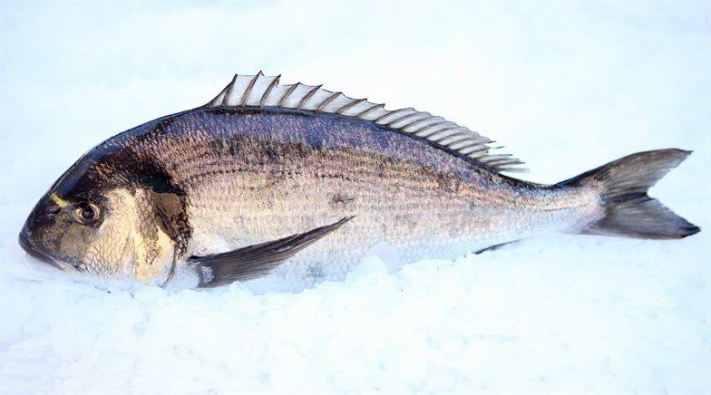 breeding and sale of European Sea-bass (Dicentrarchus labrax) and of Gilt-head Sea-bream (Sparus aurata). The breeding duration varies between 15 and 30 months