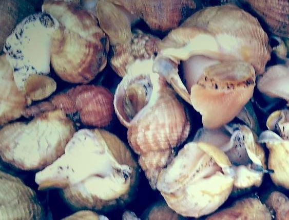 Whelks
