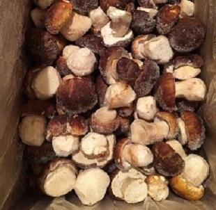 Our company offers mutually beneficial cooperation on delivery of Russian mushrooms. Our products are environmentally friendly. Mushrooms are grown in a natural environment.