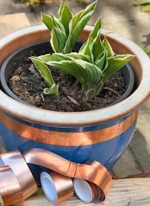 Kopertape beschermt planten tegen slakkenvraat.