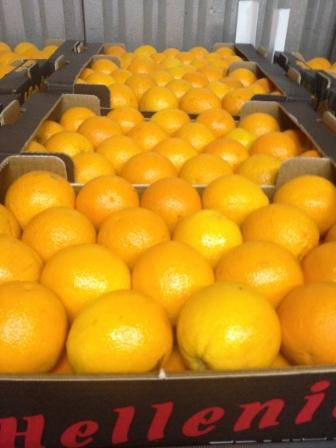 Valencia oranges caliber 4 packaged in 10kg carton box layered