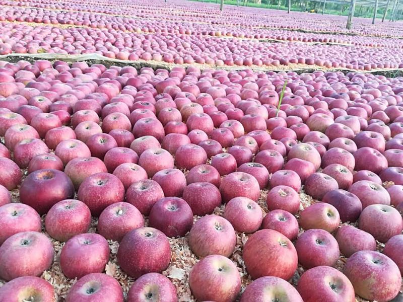 La Natura Frutta e Verdura Vendita frutta e verdure fresche
