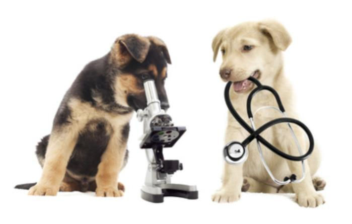 In vitro Services – better science through in vitro