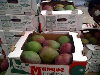 Mangue du Senegal
