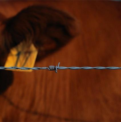 barbed wire, wire fencing, made in China
