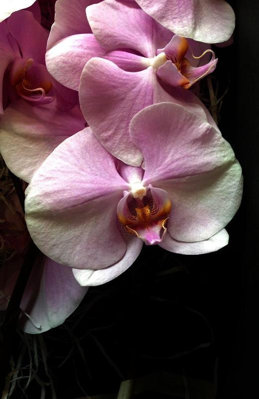 FLOREFFE fiori