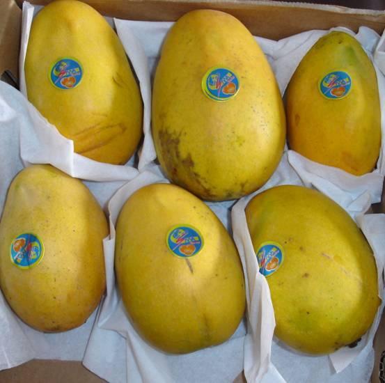 iniciamos  la temporada  de mangos