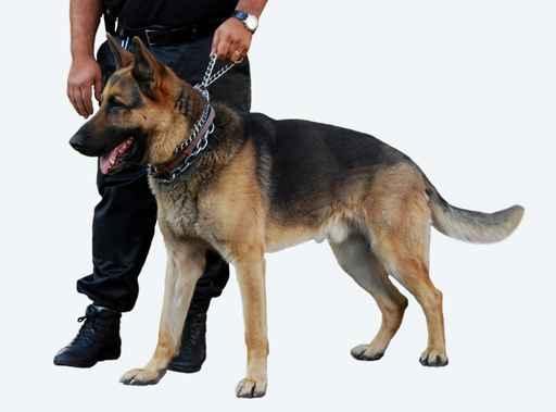 *Transport du fond •Control d' accès et gestion des flux •Agents de surveillance •Sécurisation des espaces •Protection rapproché •accompagnement VIP •Maitre chienne •Agent de parking