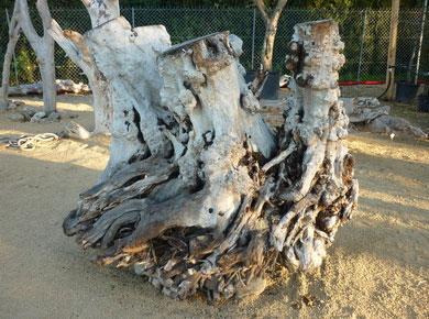 souches de bois flotté