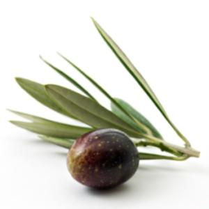 Organic olive leaf tea