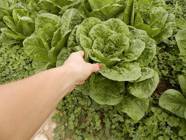 Λαχανόκηπο, σε ένα τοπίο γεμάτο με… ανθοδέσμες από μπρόκολα και κουνουπίδια, αλλά και μέσα σε τεράστια τριαντάφυλλα, όπως τα λάχανα και τα μαρούλια