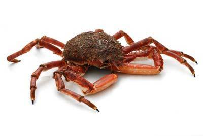 L'ECREVISSE SAS : vente en gros araignées de mer Rungis, grossiste araignées de mer Rungis. L'ECREVISSE : fournisseur araignées de mer pavillon de la marée Rungis. L'ECREVISSE : Tél : 01 46 86 41 91 .